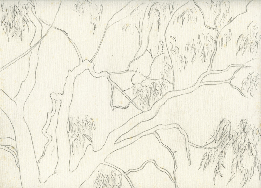 Eucalyptus branches, pencil