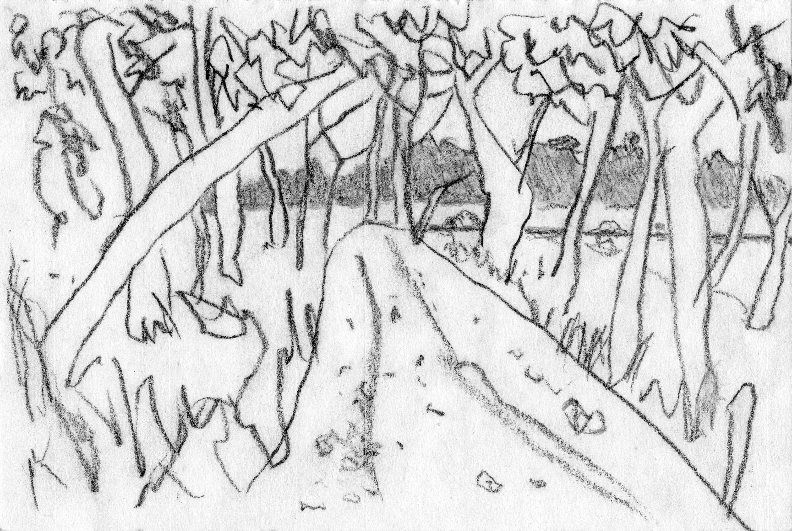Bush Track, pencil